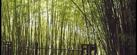 bambouseraie roque gageac